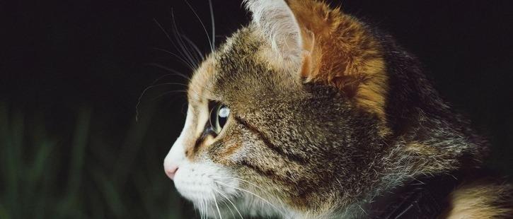Ветеринарные препараты для домашних животных