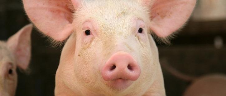 Ветеринарные препараты для свиноводства